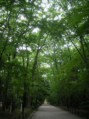 糺の森_201005.JPG