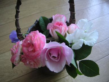 薔薇_200905.JPG
